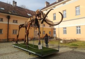 Mammoth remains in City of Kikinda, Serbia