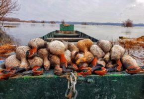 Duck Hunting in Serbia