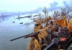 DUCK HUNTING SERBIA