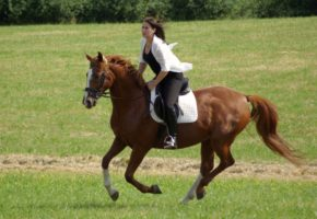Horse riding in Belgrade