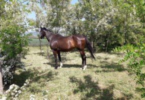Terrain horse riding in city of Sremski Karlovci
