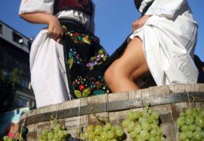 Wine tasting Sremski Karlovci