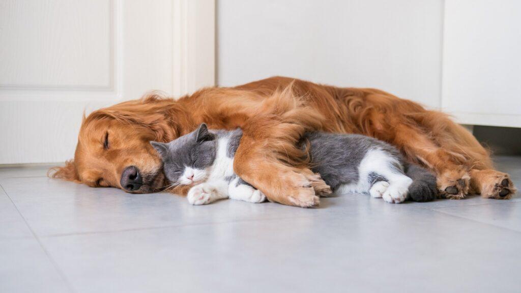 is-belgrade-pet-friendly